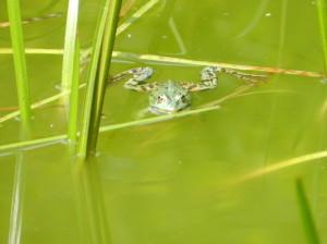 Wakacje 2013 – wzór jak pływać żabką …